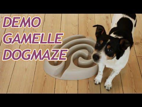 Démonstration De La Gamelle Buster DogMaze