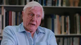 Adventures of a Young Naturalist: The Zoo Quest Expeditions, by David Attenborough (1)