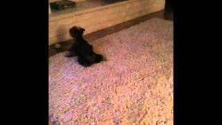 My dog got caught in the act of pissing on the rug!