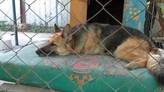 Как живет наша собака. As our dog lives.