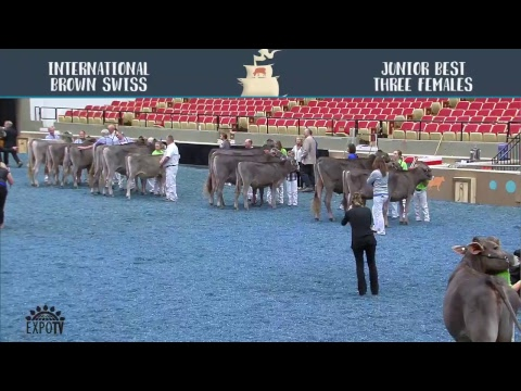 World Dairy Expo 2017   October 4th   Stream One