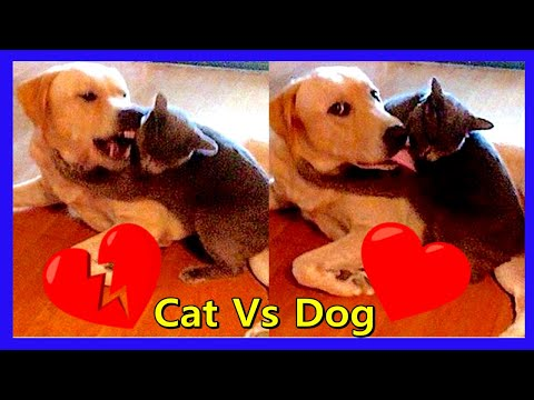 ENEMIES FOR LIFE - Dog Vs Cat Funny Compilation 2019 #1