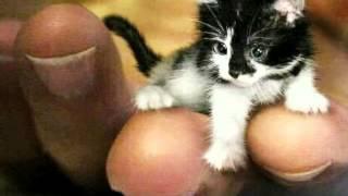 - Няшные котики и коты