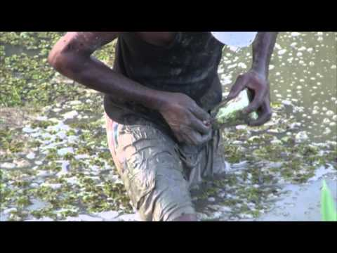 Guyana , Backdam Fishing , Patwa, Houri, Perai. (HD)