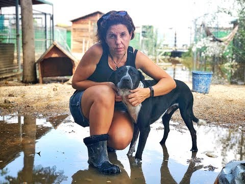 Their Darkest Hour. A Woman's Fight To Save Thousands Of Dogs After Spanish Floods