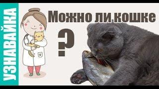 Можно ли кошке сыр, молоко,  рыбу и альбуцид? Узнавайка.