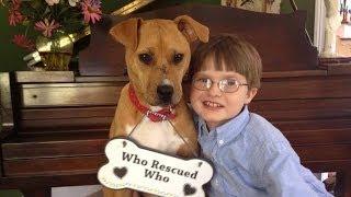 Xena The Warrior Puppy ASPCA Dog of the Year