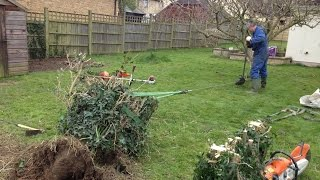 Using A Tirfor Winch Hoist To Uproot One Half Of What Was An Overgrown Pergola Rose Arch
