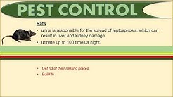 Pest Control | Food Training Course | The Right Concept