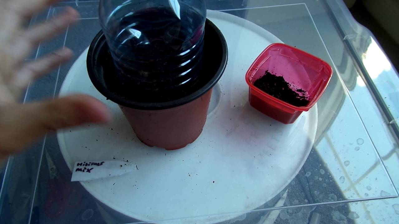Planting A Mix Of Hibiscus Seeds Youtube
