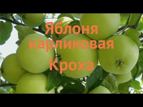 Яблоня карликовая Кроха (malus kroha) 🌿 яблоня Кроха обзор: как сажать саженцы яблони Кроха