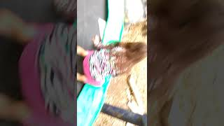 Tricks on the tramp with me and my cousin