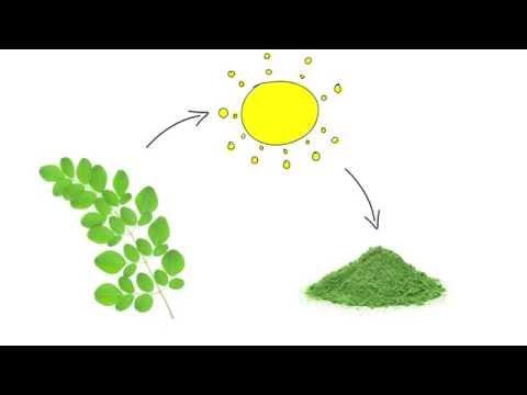 A Quick Guide to Moringa by GreensOrganic.co.uk