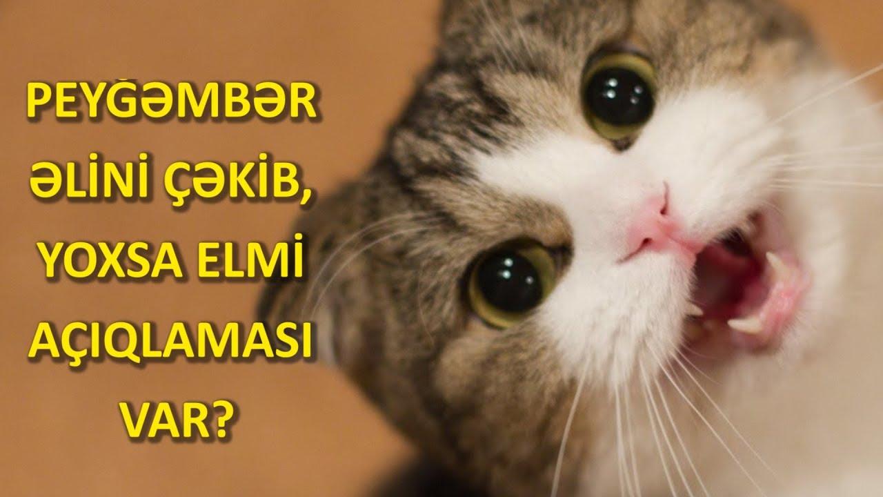Download Pişiklər niyə beli üstə düşmür?