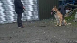 Realy Guard Dog