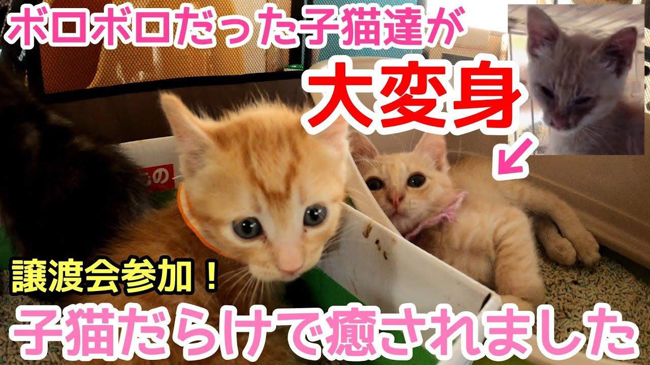 【ご支援報告】ボロボロの子猫達が大変身!子猫だらけの譲渡会に参加してきました!