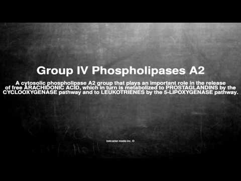 Medical vocabulary: What does Group IV Phospholipases A2 mean