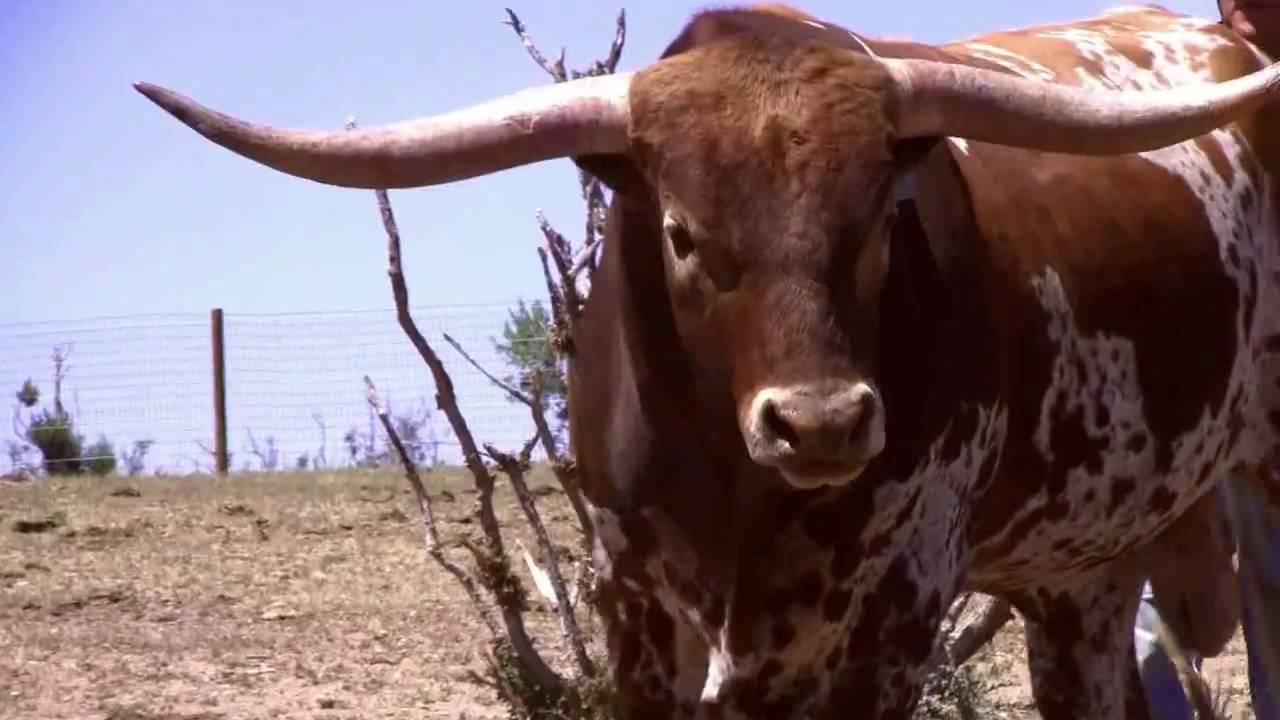 J Bar H Ranch - Killer The Bull