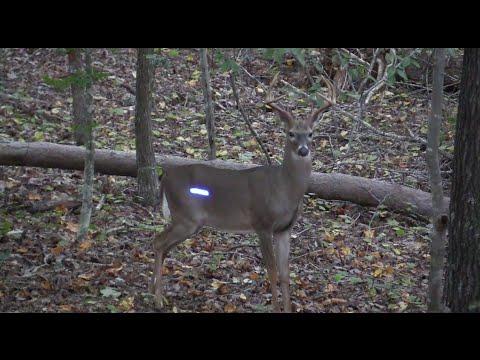 Deer Hunting North Carolina | Chapter 3.1 -