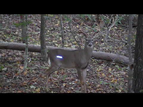 Deer Hunting North Carolina | Season 3 - Ep. 1 -