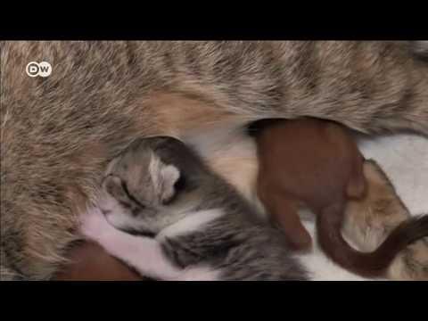 Смотреть Как кошка кормит бельчат, или Очень милые и смешные животные онлайн