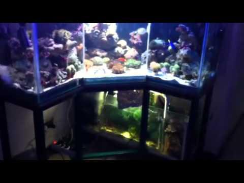400 liter l shape aquarium youtube. Black Bedroom Furniture Sets. Home Design Ideas