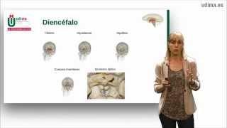 Clase sobre la anatomía del encéfalo