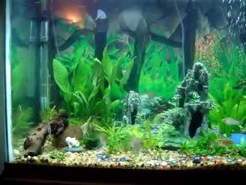 Freshwater Tropical Community Aquarium 65 Gallon