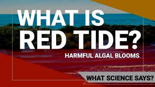 What is red tide and why is it harmful to humans and to environment?   What Science says