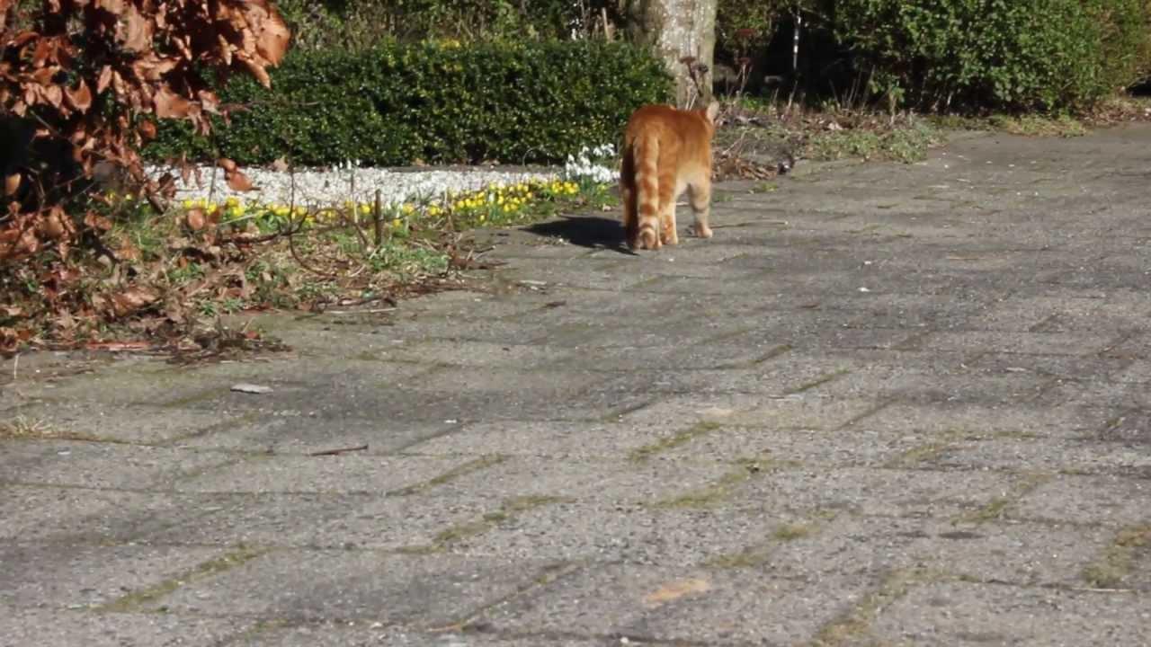 Katten Afschrikken Tuin : Overlast katten meneer lemmert ergert zich aan katten die in zijn