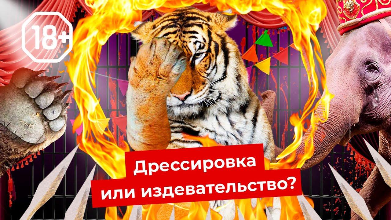 Шоу для извергов: цирки и дельфинарии нужно запретить | Как страдают животные