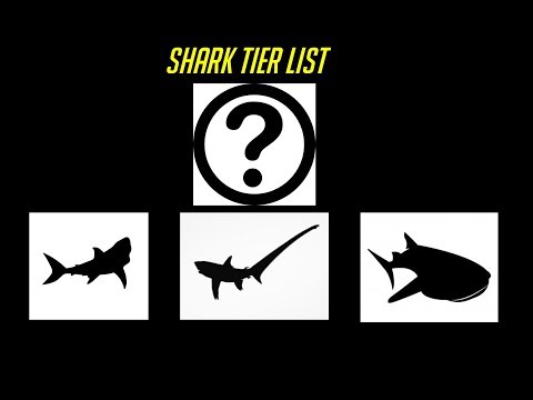 The Shark Tier List