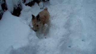 Bailey loves the snow! Thumbnail