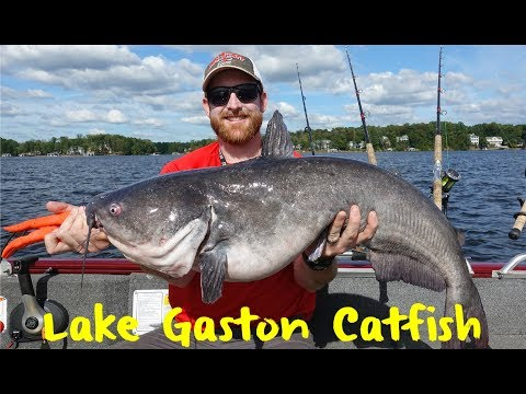 Lake Gaston Catfish