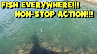 SO MANY SPECIES Down There!! NON-STOP ACTION!!! (2019 Miami Trip -- 1/5)