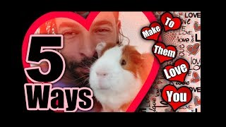 5 Ways to Make Your Guinea Pig Love You