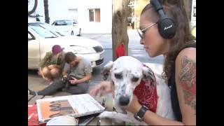 Тайная жизнь бездомных животных. Макс ФМ и Поводог