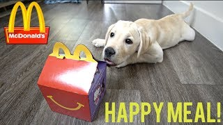 LABRADOR PUPPY HAS FIRST MCDONALDS HAPPY MEAL!!