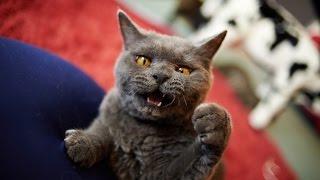 Приколы про котов.Топ самых злых котов.