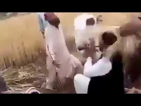 Go Nawaz Go song on cultivation of Wheat...