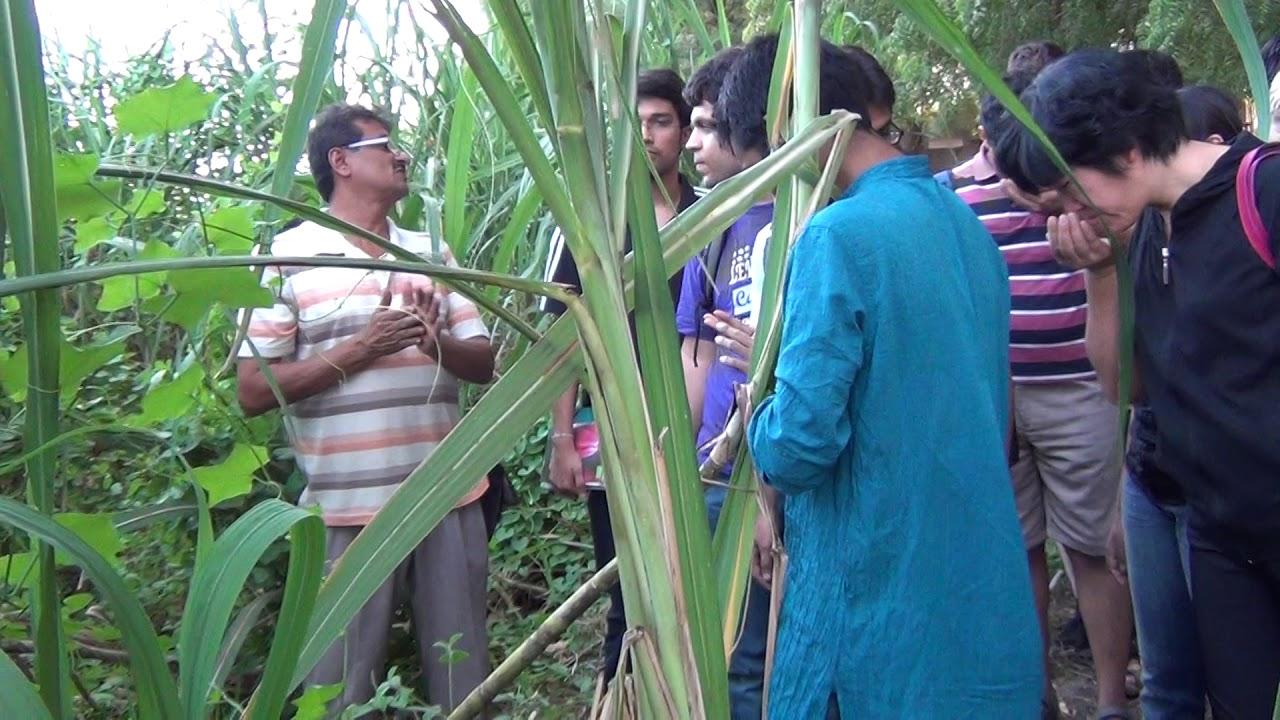Organic Farming- Sardar Patel Farm