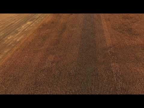 Corn School -  Drone Insights