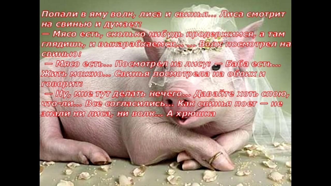 Анекдот Юмор Смех Волк, лиса и свинья - YouTube