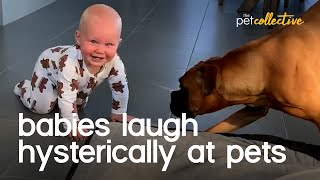 Babies Laughing Hysterically With Dogs