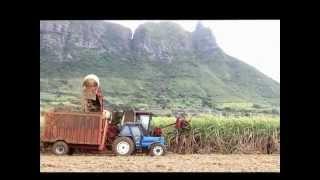 Sugar Cane Harvesting Mauritius 2012