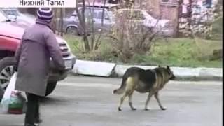 Стая бродячих собак против детского сада(, 2012-12-14T12:16:45.000Z)