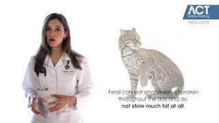 Obesity in Pets:  Veterinary Medical Conditions