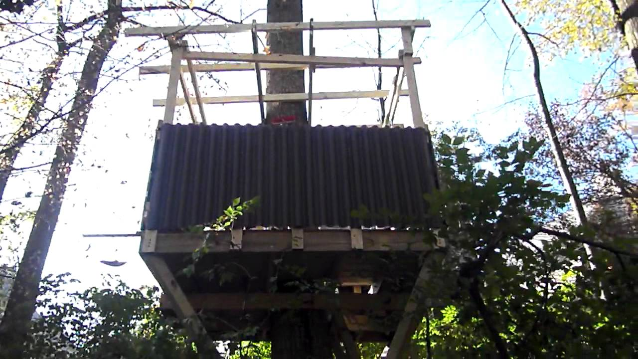 Building adam 39 s treehouse video 8 just before putting on for How to build a treehouse roof