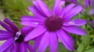 SONG NAME JETHA RAMDHONU OTHE HESE -V.BALSARA-SHYAMAL GUPTA-TALAT MEHMOOD
