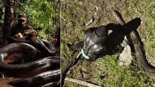 Homem sendo engolido vivo por anaconda gigante - CENAS FORTES